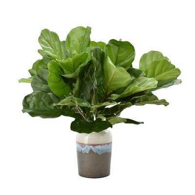 Fiddle Leaf Fig Foliage Plant in Pot - Wayfair