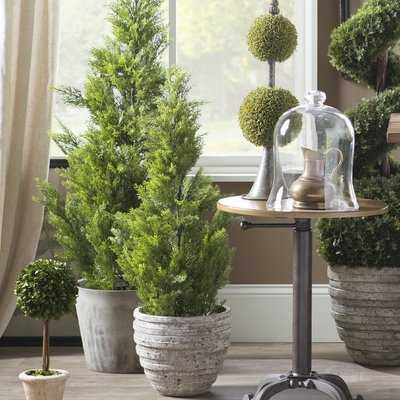 Evgenia Cedar Topiary Plant in Pot - Birch Lane