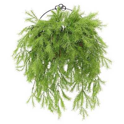 Pine Branch Wall Hanging Boxwood Topiary in Basket - Wayfair