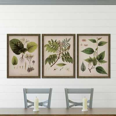 Plants I by Mendez - 3 Piece Picture Frame Graphic Art Print Set on Paper - Birch Lane