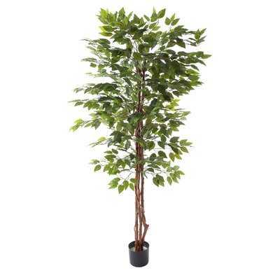 "80"" Artificial Ficus Tree - Wayfair"