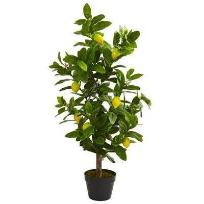 Lemon Floor Foliage Tree in Planter - Wayfair