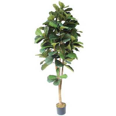 Silk Fiddle Leaf Fig Tree in Pot - Wayfair