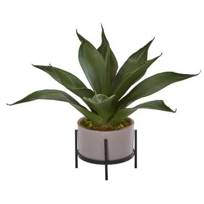 14 in. Indoor Agave Succulent in Decorative Planter - Home Depot