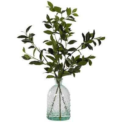 Bay Leaf Branch in Planter - Wayfair