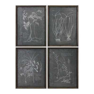 'Root Study' 4 Piece Picture Frame Graphic Art Set - Birch Lane