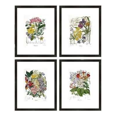 'Botanical' Framed Prints - Wayfair