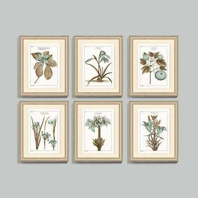 "Ballard Designs Buchoz Botanical Spa Art  23"" x 19"" - Ballard Designs"