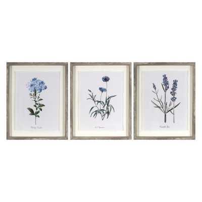 """Set of 3 16""""x20"""" Framed Vintage Botanicals Decorative Wall Art - Threshold - Target"""