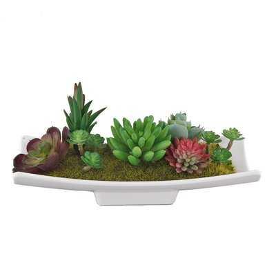 Desktop Succulent Plant - Wayfair
