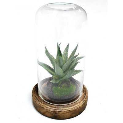 Succulent Plant - Wayfair