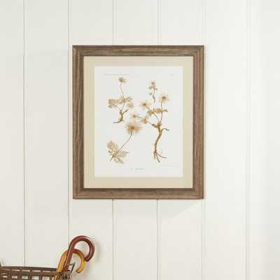'Botanical' Picture Frame Print - Birch Lane