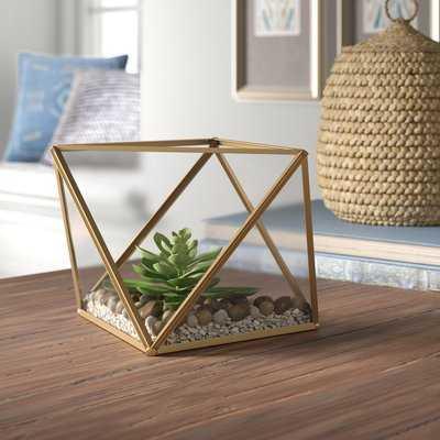 Desktop Succulent Plant in Glass Terrarium - AllModern
