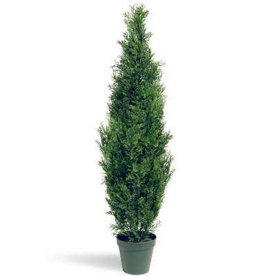 Evgenia Cedar Topiary Plant in Pot - AllModern
