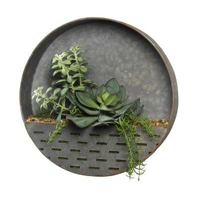 Frosted Echeveria, Tree and Rosemary Succulent in Metal Wall Sconce - Wayfair