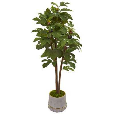 Fig Tree in Decorative Vase - Wayfair