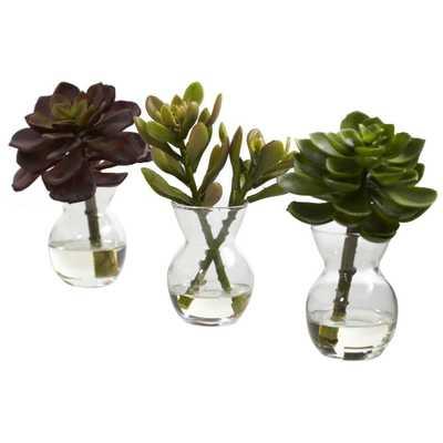Succulent Arrangements (Set of 3) - Home Depot