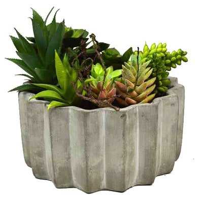 Succulent Plant in Planter in Planter - Wayfair
