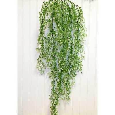 Bush Hanging Plant - Wayfair