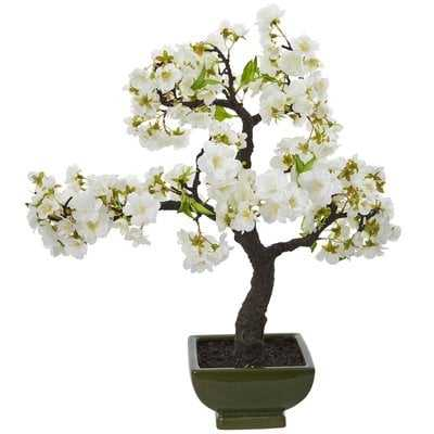 Cherry Blossom Flowering Bonsai Tree - Wayfair