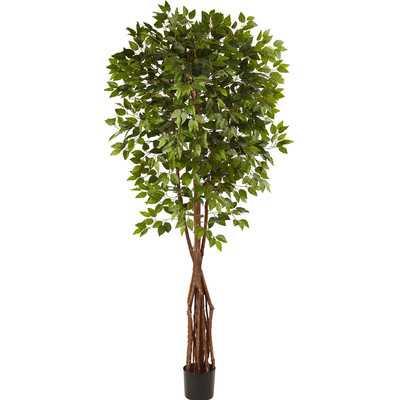 Super Deluxe Ficus Tree in Pot - Wayfair