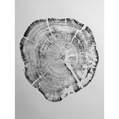'West Glacier National Park Tree Ring Print' Graphic Art - Wayfair