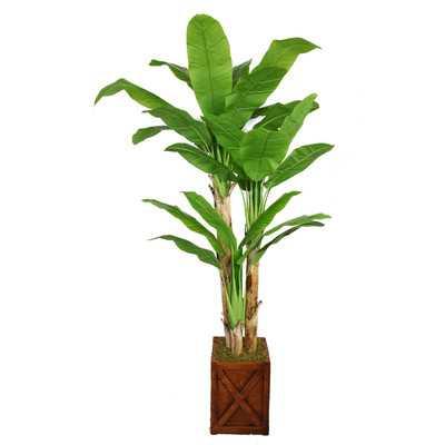 Tall Banana Tree in Planter - Wayfair