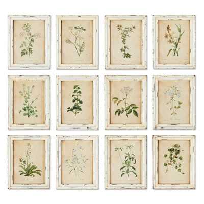 Wild Flower Botanical 12 Piece Framed Graphic Art Set - Wayfair