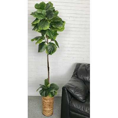 Fiddle-Leaf Fig Tree In Basket - Birch Lane
