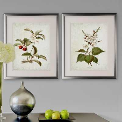 'Vintage Botanical Sketch IV' 2 Piece Framed Acrylic Painting Print Set - Birch Lane