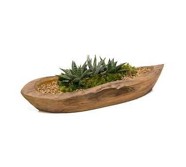 Teak Basin Live Garden - Small - Pottery Barn