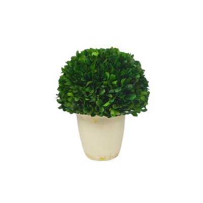 Boxwood Ball Topiary in Pot - Wayfair