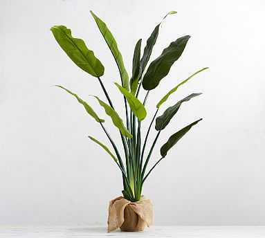 Faux Potted Bird of Paradise Palm Tree - Pottery Barn