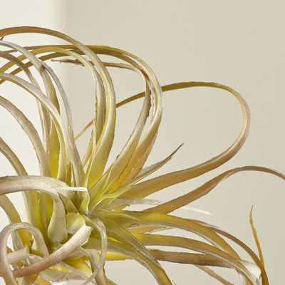 Tillandsia Curly Faux Succulent Stem - Crate and Barrel