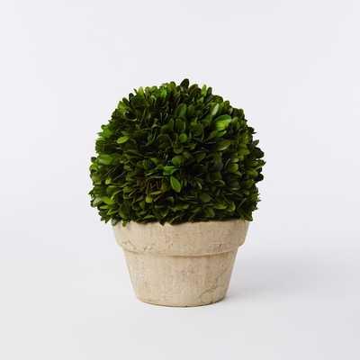 Boxwood Tree, Ball + Pot, Small - West Elm
