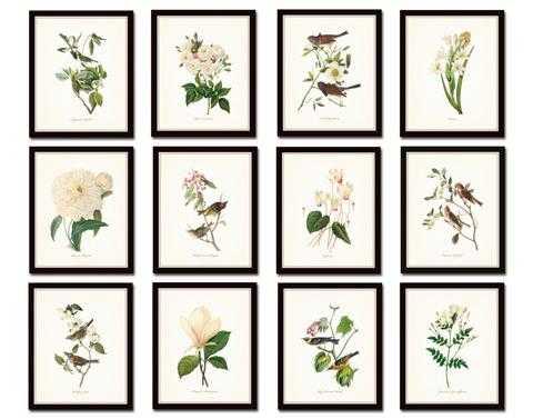 "BIRD AND BOTANICAL PRINT SET NO. 10 - 8'x10"" Set of 12 - Belle Maison Textiles"