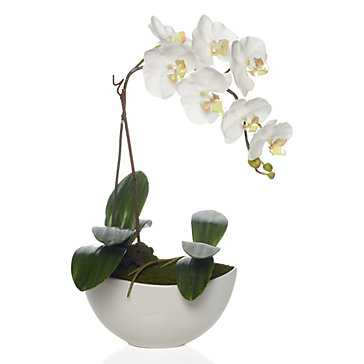 Potted Phalaenopsis - Z Gallerie