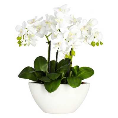Lorelei Phalaenopsis Silk Flowers in Pot - Wayfair