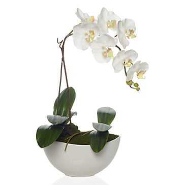 Faux Potted Phalaenopsis - Z Gallerie