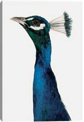 """Head and Neck of a Peacock Art on Canvas - 28"""" x 40"""" - Unframed - Photos.com by Getty Images"""