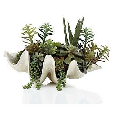 Succulent Shell Pot - Z Gallerie