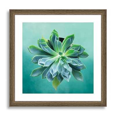 Minted for west elm - Pointed Succulent - 16''x 16''-Wood frame with mat - West Elm