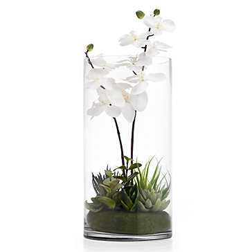 Orchid With Succulents In Vase - Z Gallerie