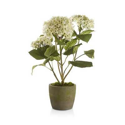 Potted Hydrangea Plant - Crate and Barrel