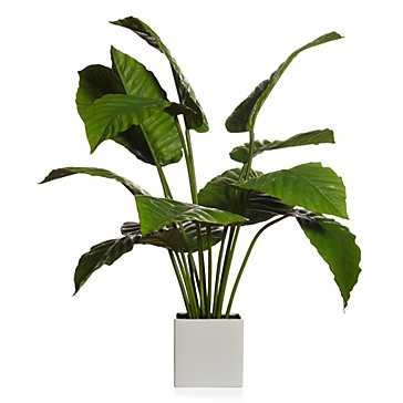Potted Canna Leaf Plant - Z Gallerie