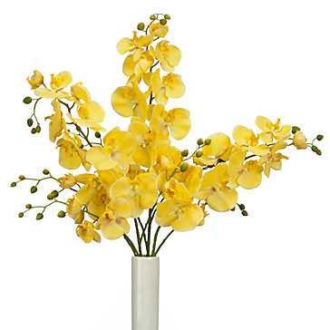 Phalaenopsis Spray - Set of 3 - Z Gallerie