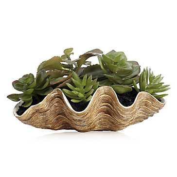 Succulent With Nautilus Pot - Z Gallerie