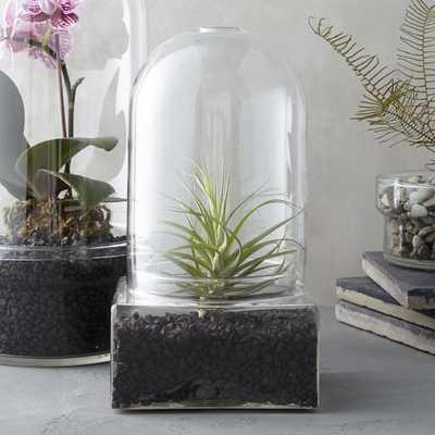 Glass Cloche Terrarium, Square Base, Short - West Elm