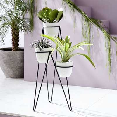 Iris Planter + Chevron Stand - Triple - West Elm