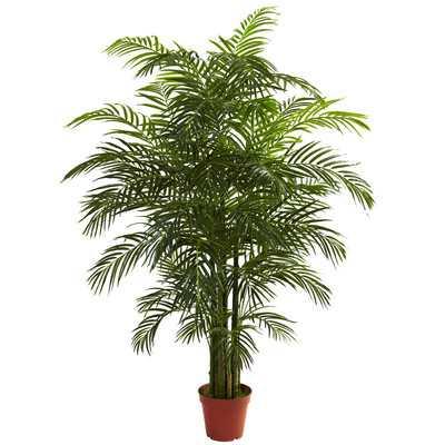 Areca Palm Tree Floor Plant in Pot - Wayfair